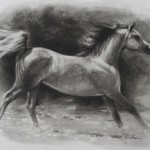Charcoal study for Galloping Goldenrod copy