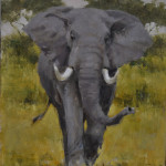 Charging African Elephant- 12x9 oil on panel-private collection