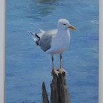 Maine Gull-8x6 oil-SOLD